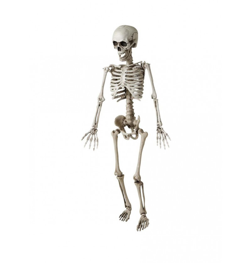 Esqueleto articulado 120 cm