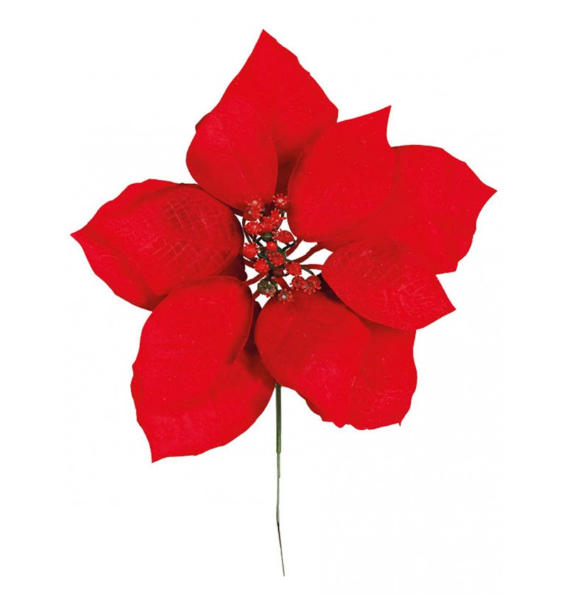 flor ponsetia
