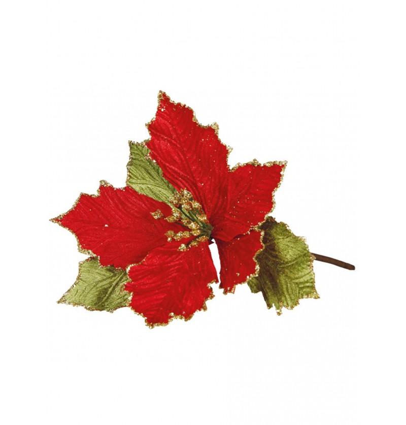 Flor de pascua roja