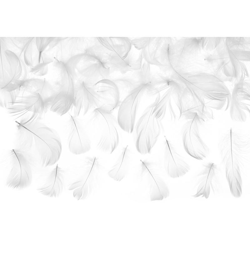 Plumas blancas decorativas