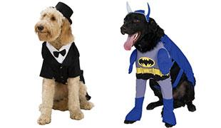 Disfraces Mascotas